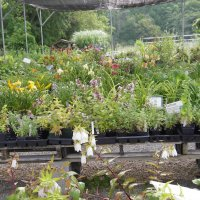 Part of our plant sales area