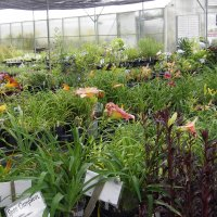 Perennial plant sales area