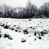 Snow covered lavender 1