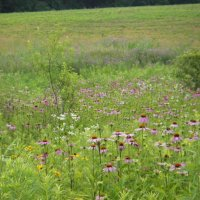 Wildflower Meadow 2
