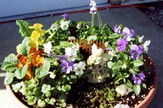 Fairy statuette in a container garden with pansies